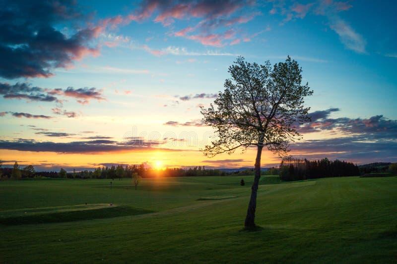 Árvore só no por do sol foto de stock