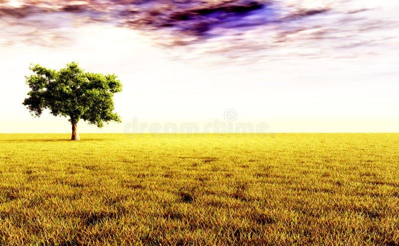 Árvore só no prado fotografia de stock