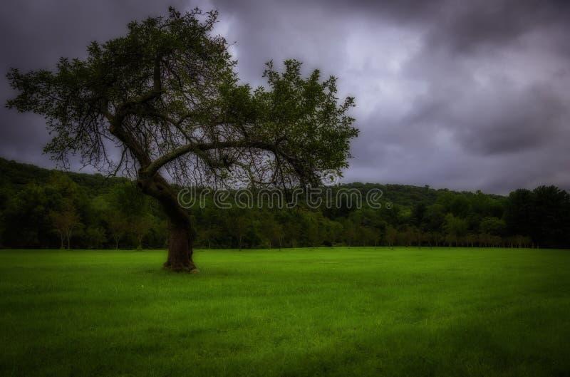 Árvore só sob o céu temperamental fotografia de stock