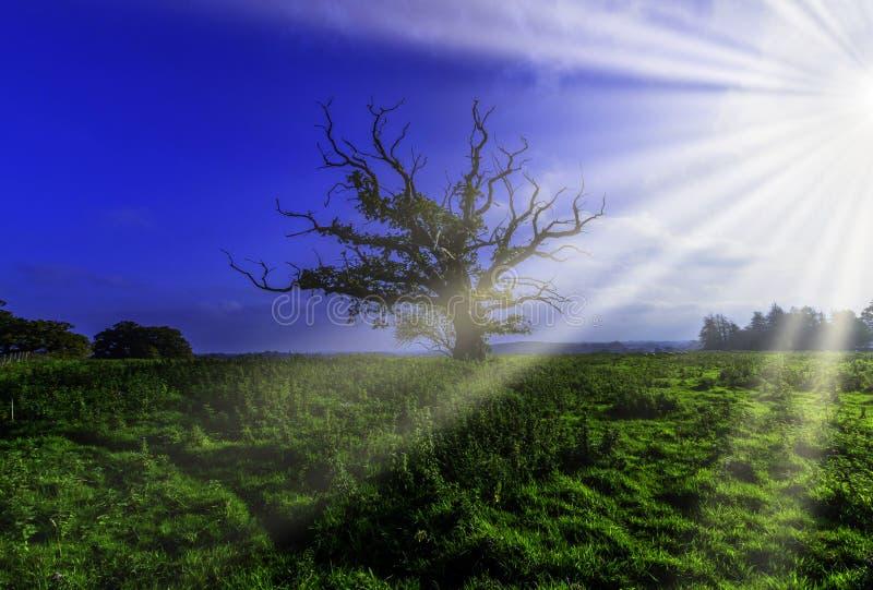 Árvore só - Uckfield, Sussex do leste, Reino Unido imagem de stock