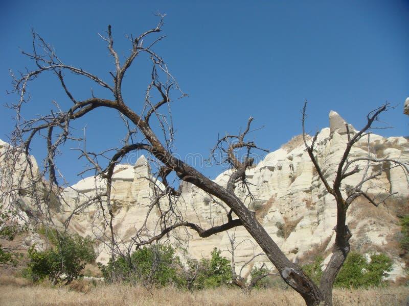 Árvore seca com atrás das rochas brancas do Cappadocia em Turquia imagens de stock