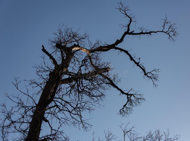 Árvore seca com o céu nebuloso na floresta imagem de stock