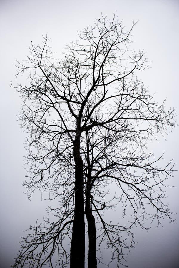 Árvore seca da morte imagem de stock