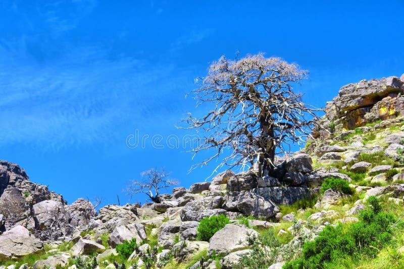 Árvore seca em uma inclinação imagens de stock