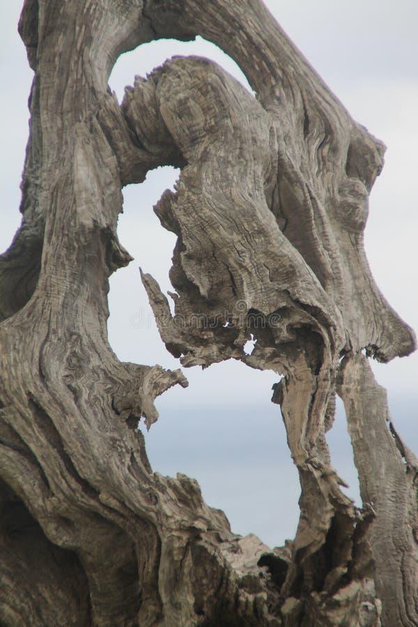 Árvore seca, escultura natural fotografia de stock