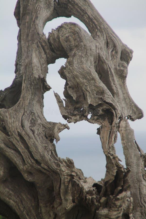 Árvore seca, escultura natural fotos de stock