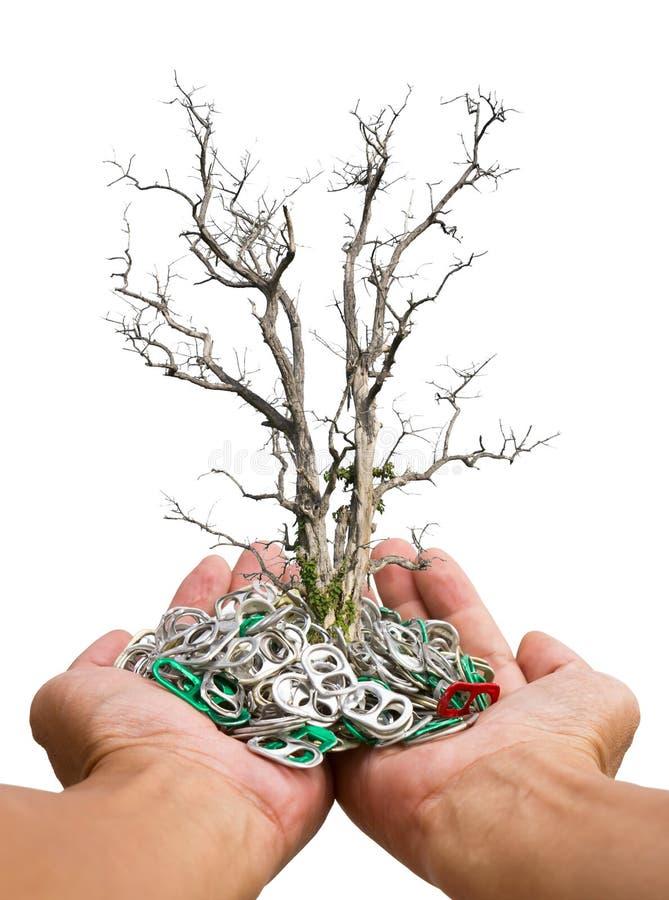 Árvore seca no abridor disponível imagens de stock