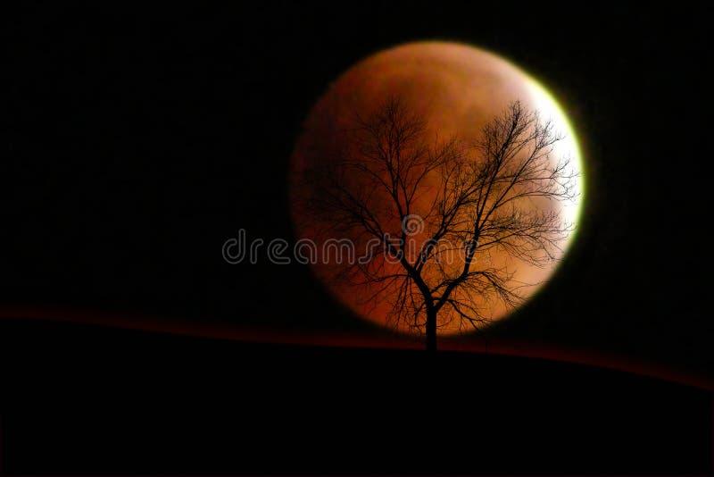 Árvore seca no fundo do eclipse da lua fotografia de stock