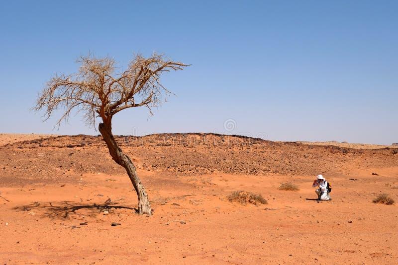 Árvore seca sozinha no deserto do Negev imagens de stock