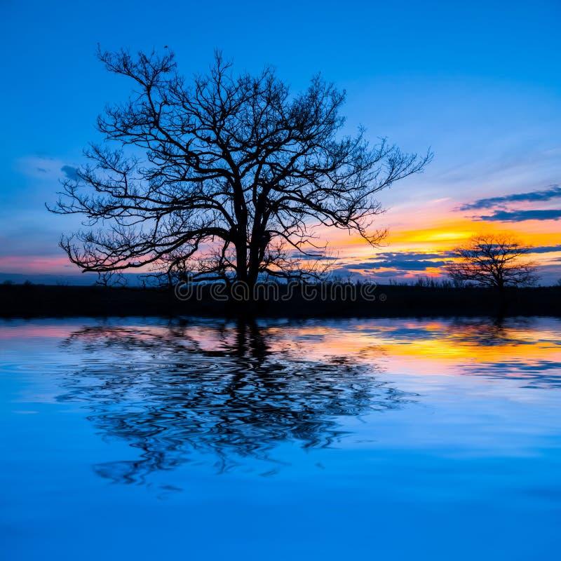 A árvore seca sozinha refletiu em uma água no por do sol imagens de stock