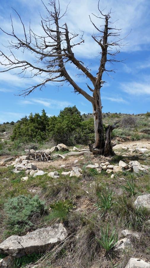 Árvore secada solitário velha nas montanhas imagens de stock royalty free