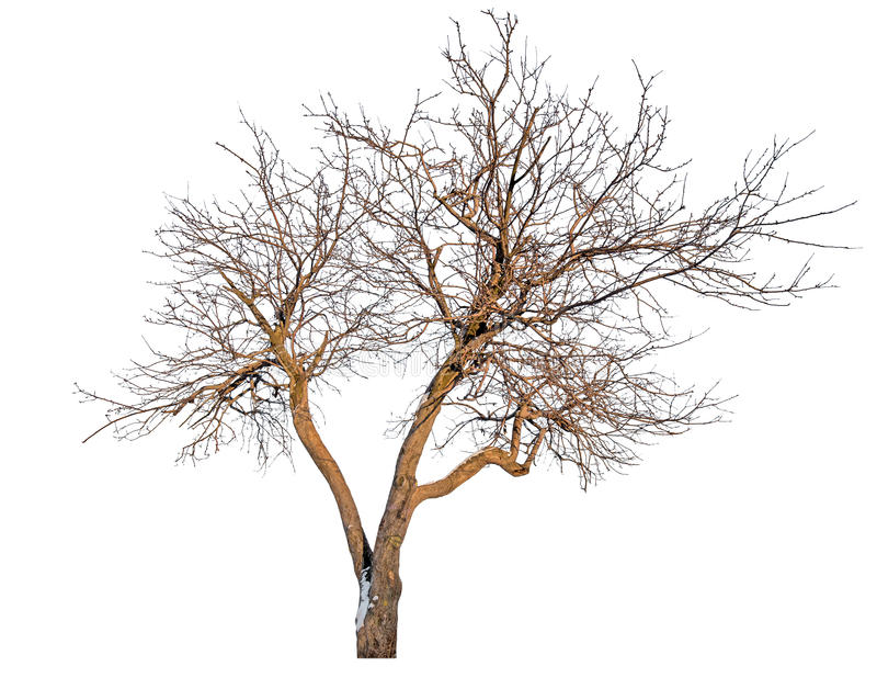A árvore desencapada com neve permanece imagens de stock royalty free