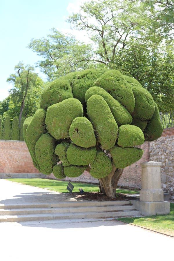 Árvore shapped engraçada foto de stock royalty free