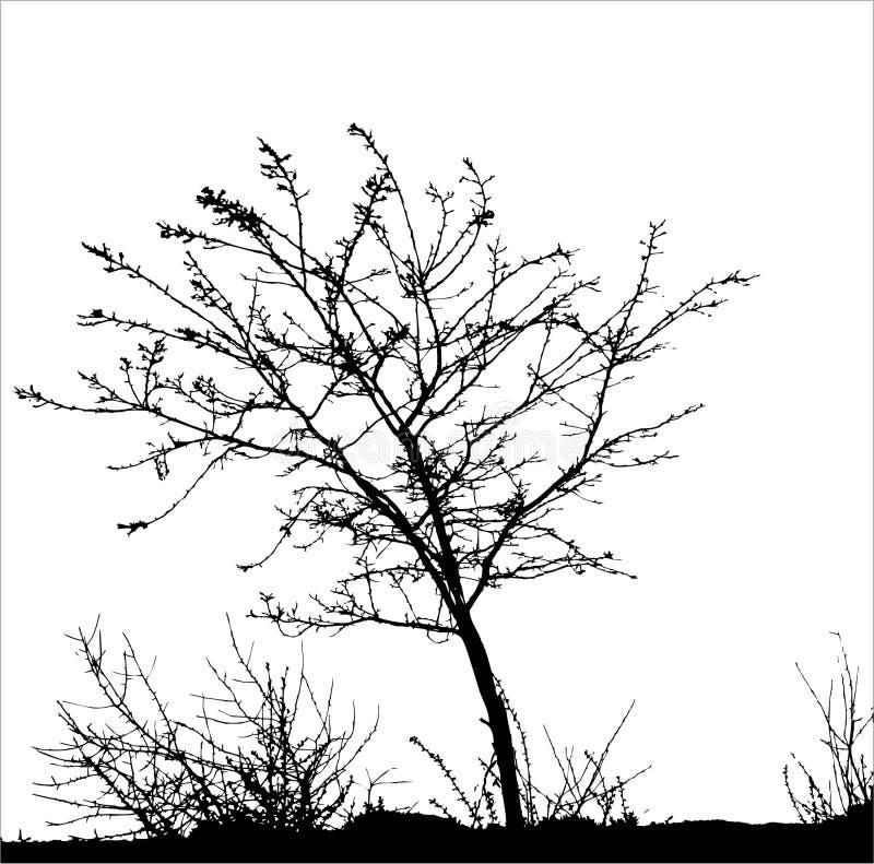 Árvore/silhueta do vetor ilustração stock