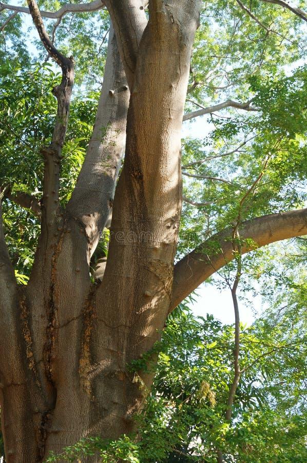 Árvore sob a luz solar fotos de stock