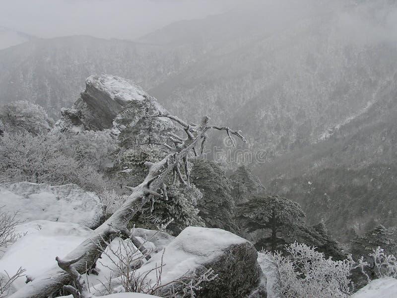 Árvore sobre a montanha de Jirisan no inverno em Coreia imagens de stock royalty free