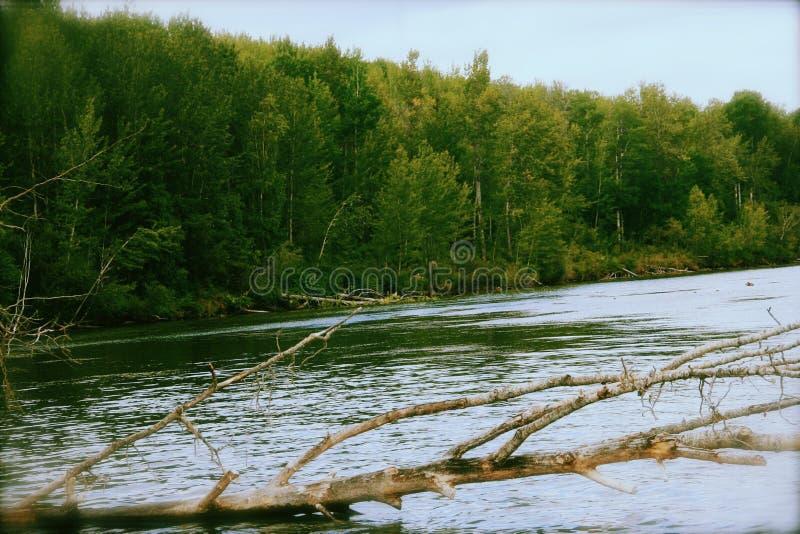 árvore sobre um lago foto de stock