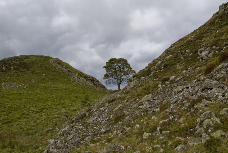 Download Árvore solitária. imagem de stock. Imagem de campo, folha - 16856603