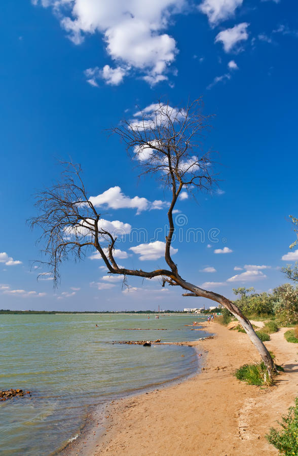 Árvore solitária imagens de stock