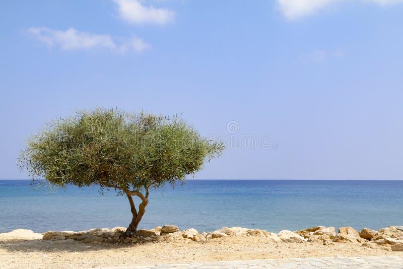 Árvore solitária ao lado do mar no dia ensolarado com céu azul fotos de stock