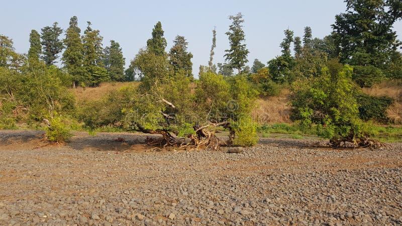 Árvore solitária crescida nas pedras fotografia de stock royalty free