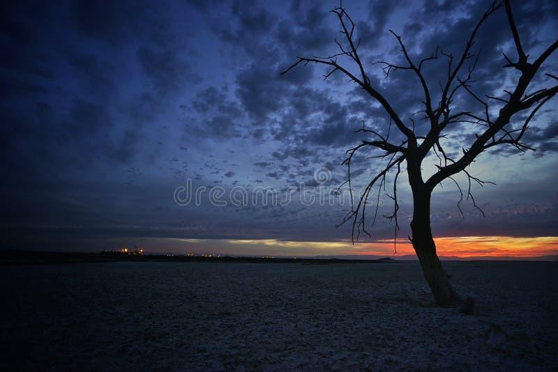 Árvore solitária e por do sol imagens de stock