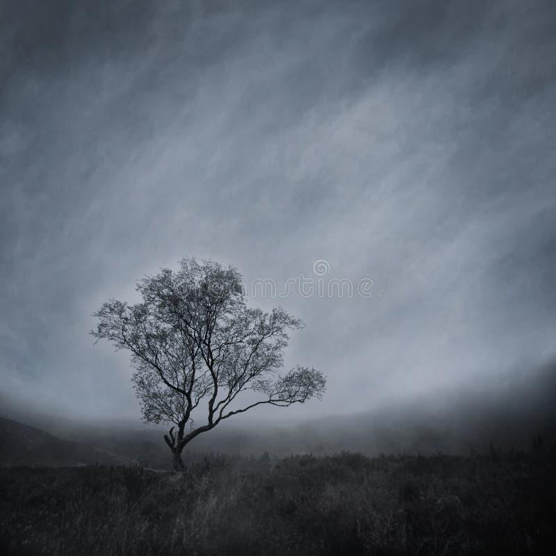 Árvore solitária em uma paisagem enevoada imagens de stock