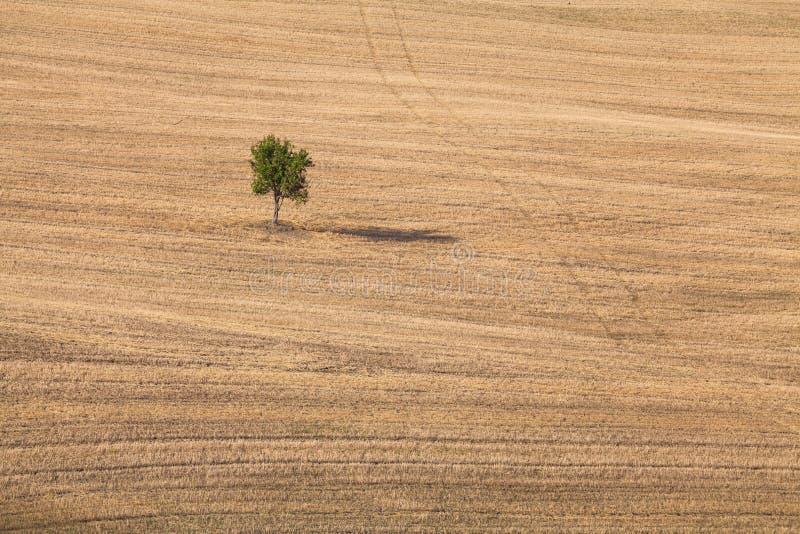 Árvore solitária em uma terra larga do campo em Val d 'Orcia, Toscânia, Itália imagem de stock