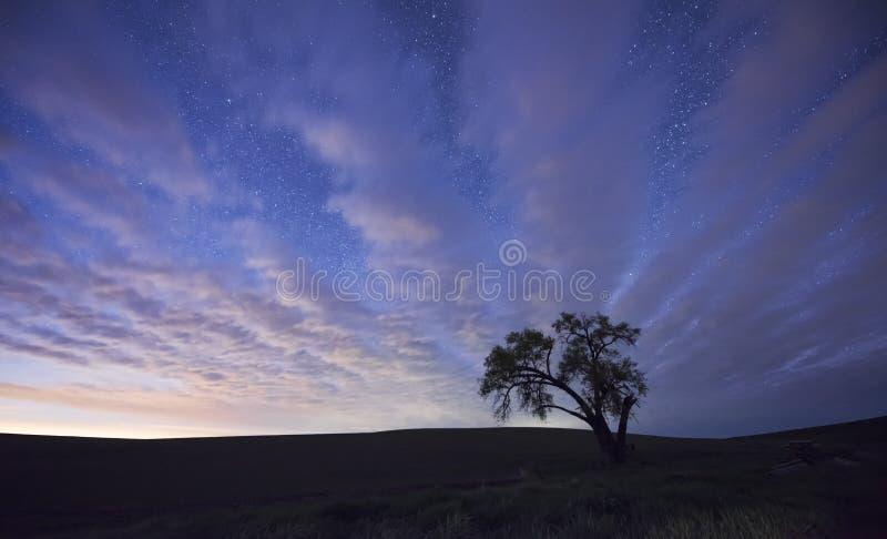 Árvore solitária na noite imagem de stock royalty free