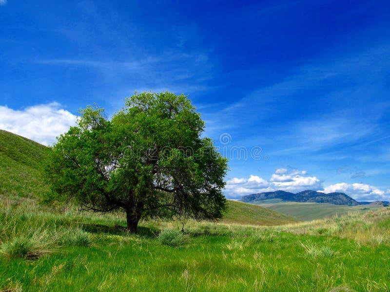 Árvore solitária no campo com céu fotografia de stock royalty free