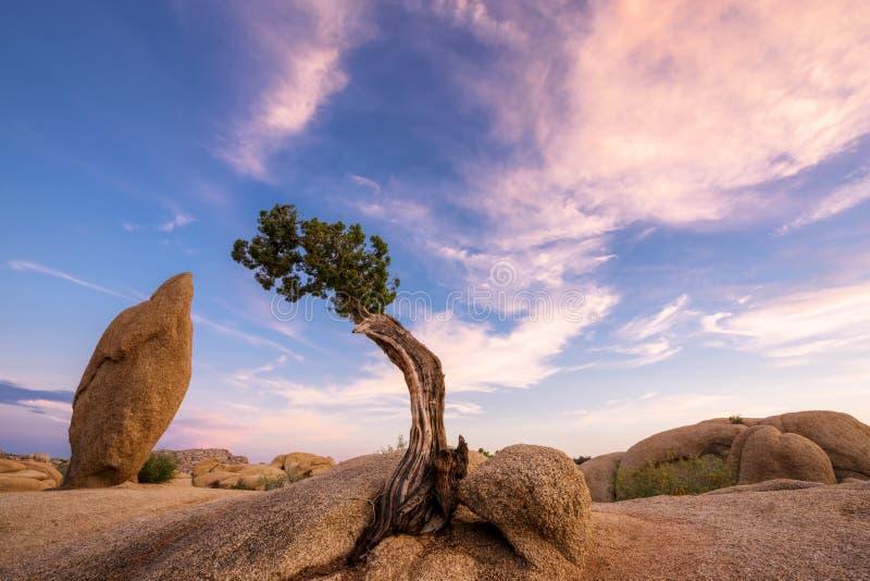 Árvore solitária no crepúsculo foto de stock