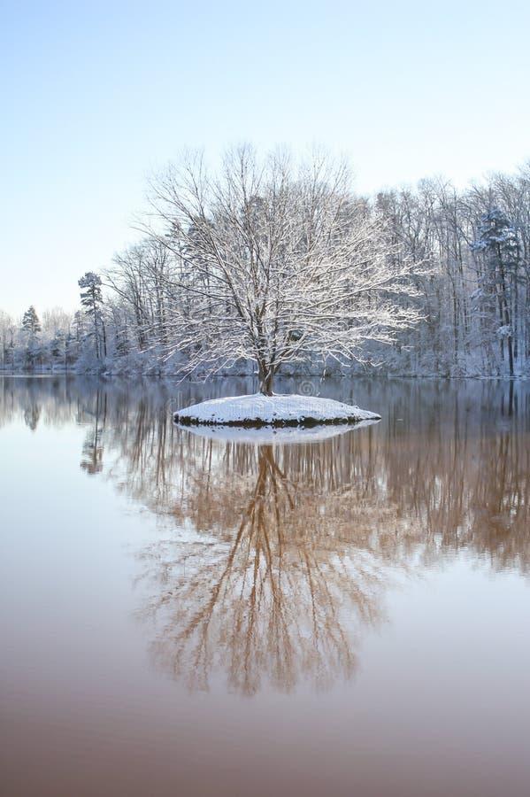 Árvore solitária no inverno foto de stock