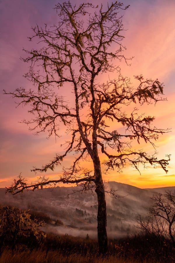 Árvore solitária observando sobre o Vale no Sunset fotos de stock