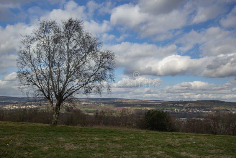 A árvore solitária olha sobre o campo escancarado fotos de stock royalty free