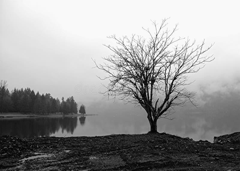 Árvore solitária por um lago nevoento imagens de stock royalty free