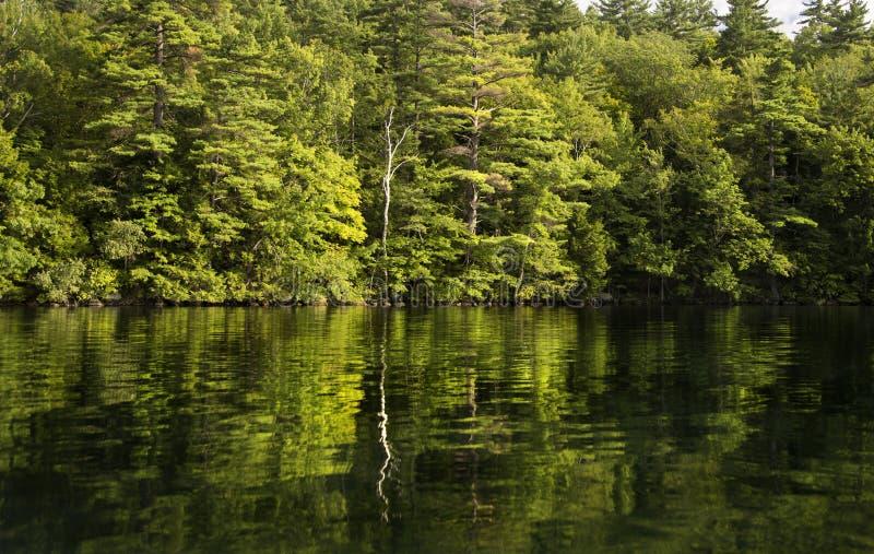 Árvore solitária refletida na água do lago imagens de stock
