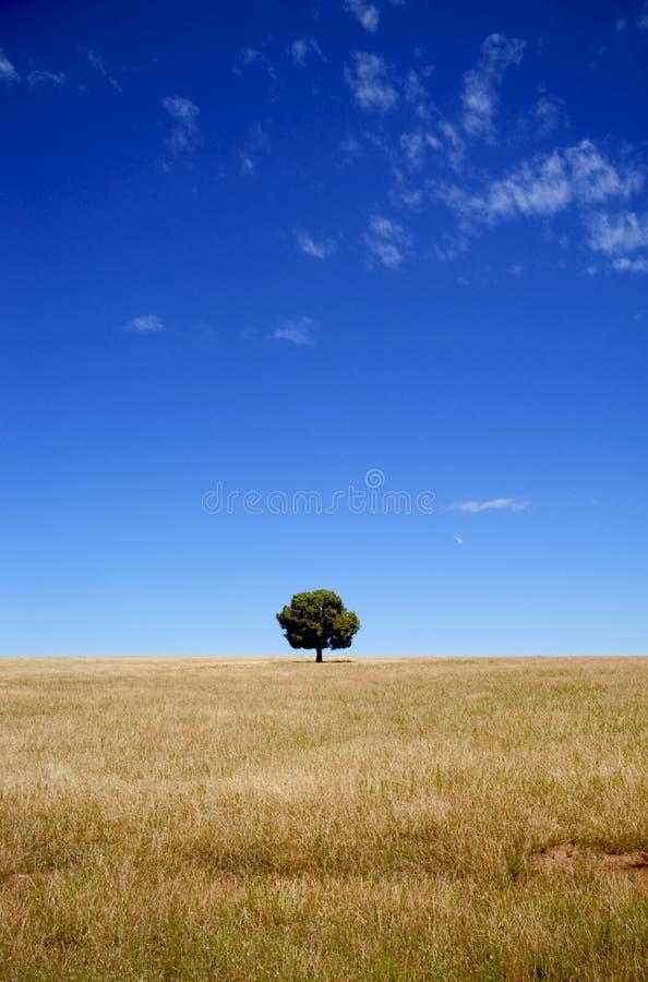 Árvore solitário imagens de stock