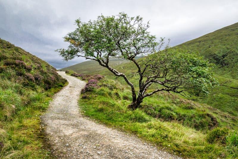 Árvore solitário nas montanhas foto de stock