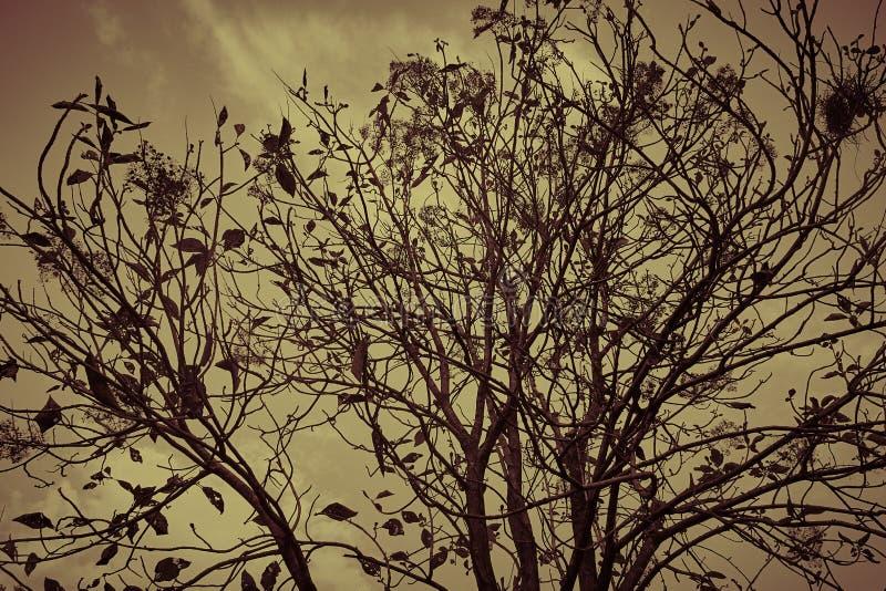 Árvore sombrio fotos de stock royalty free