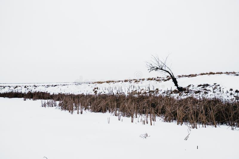 Árvore sozinha em uma costa do lago congelado no inverno fotografia de stock