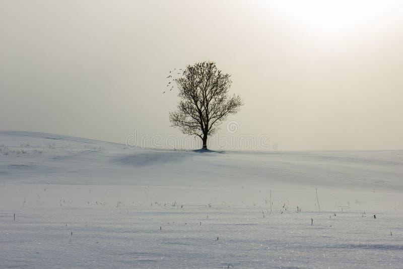 Árvore sozinha no tempo de inverno fotos de stock royalty free