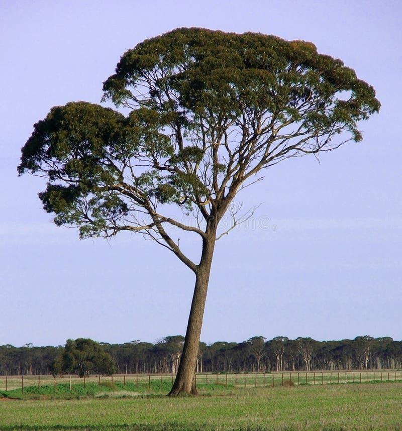 Árvore sozinho imagens de stock royalty free