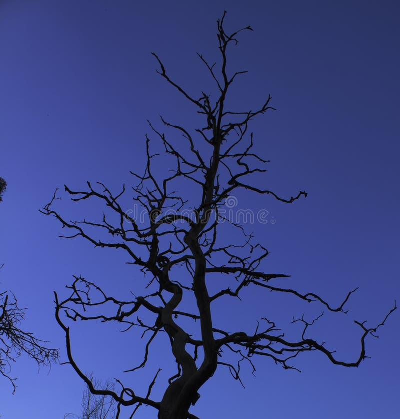 Árvore sulcado da silhueta contra o céu fotografia de stock royalty free
