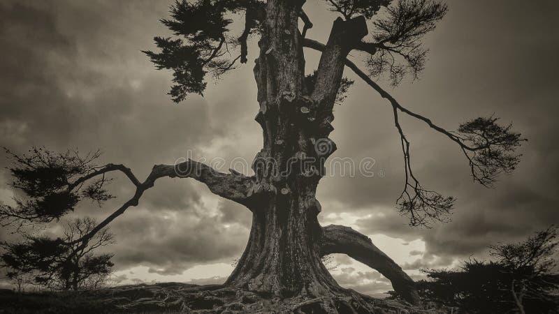 Árvore temperamental imagem de stock royalty free