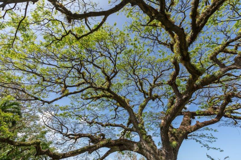 Árvore torcida contra o céu azul imagem de stock