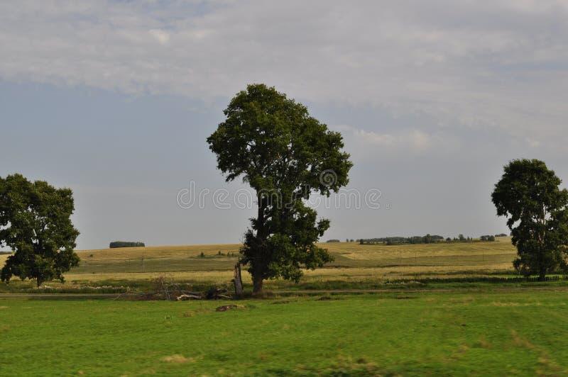 Árvore três só no meio do campo fotos de stock royalty free