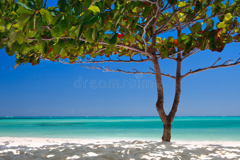 Árvore tropical de Zanzibar na praia fotografia de stock