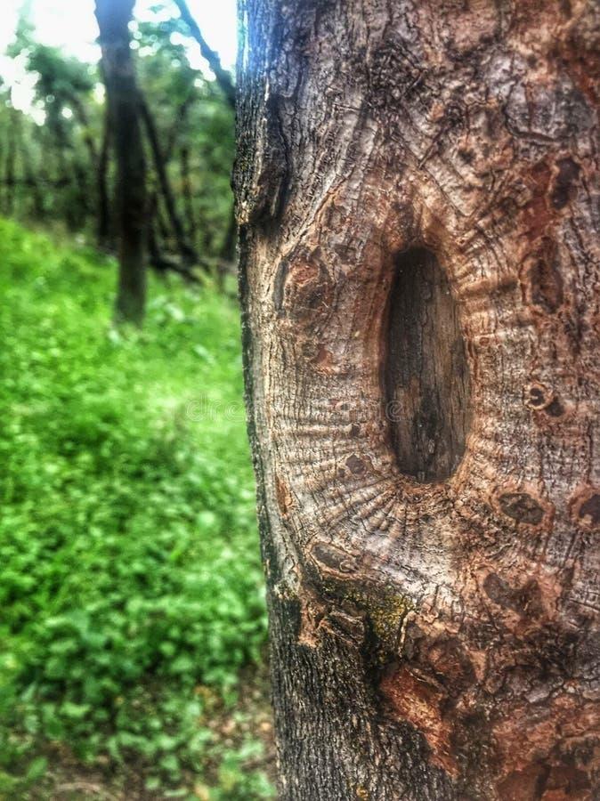 Árvore velha imagem de stock