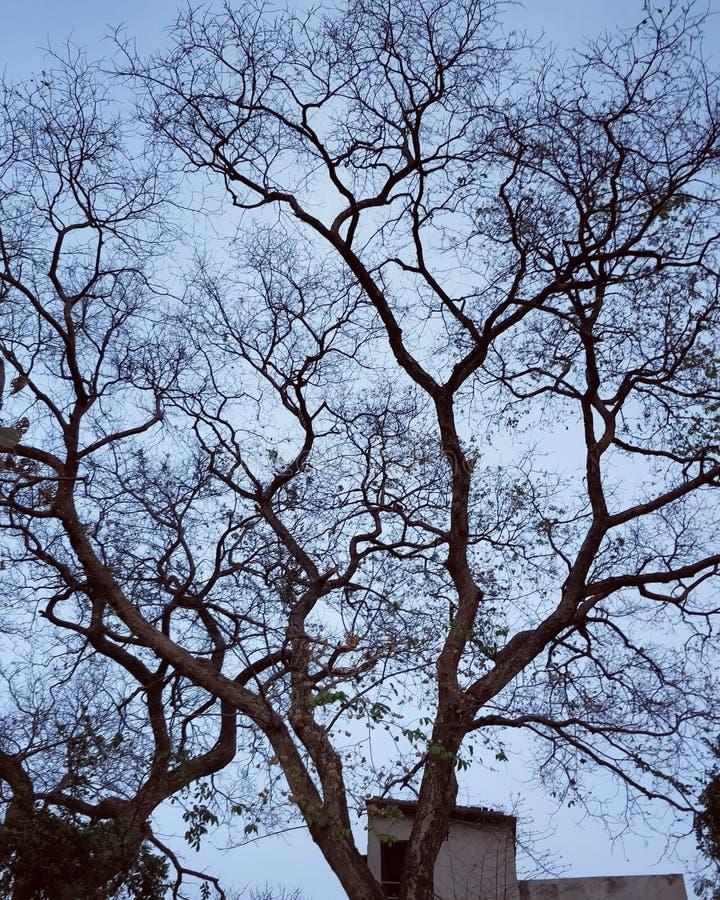 A árvore velha imagem de stock