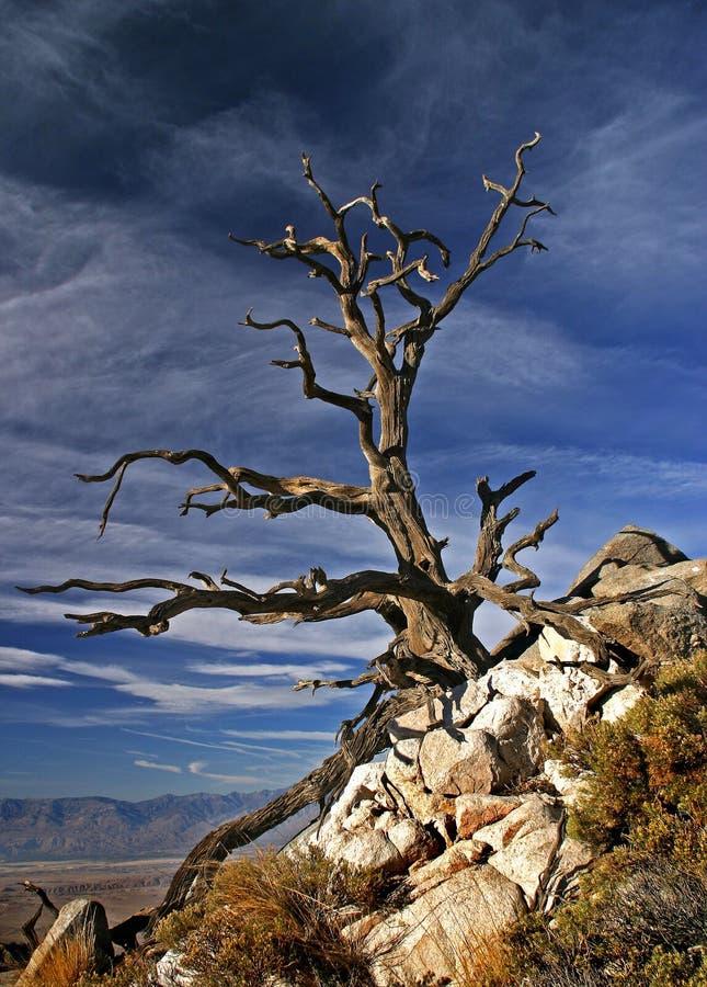 Árvore velha assustador imagem de stock